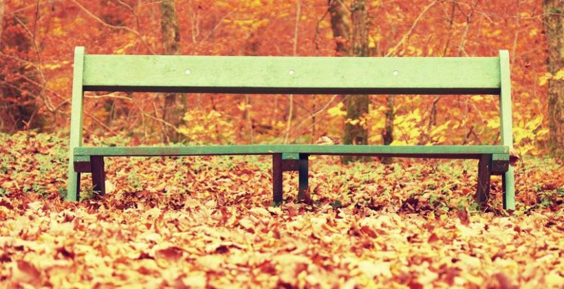 49946081 - sad abandoned green bench in the park under dry maple and beech leaves.